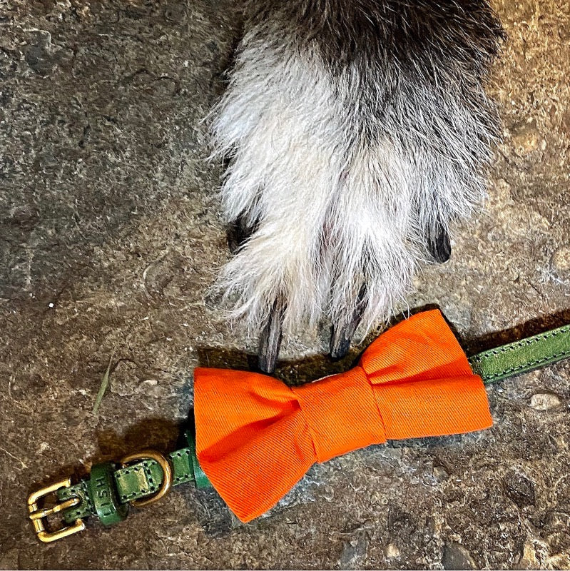 orange cotton designer dog bow tie by LISH luxury petwear