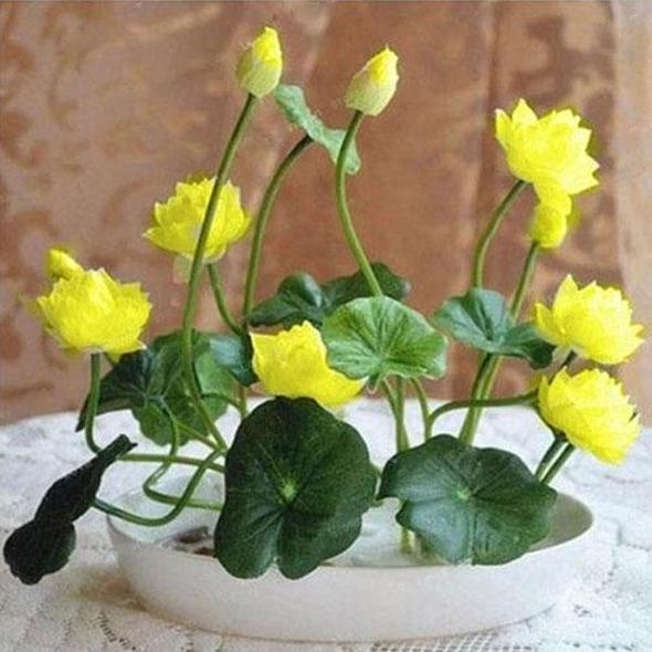Premium Bonsai Lotus Flower Seeds (10 Seeds/Pack)-Buy 2 get 20%OFF