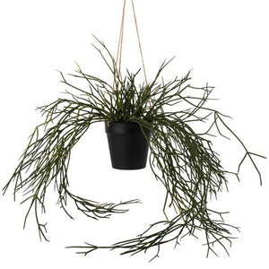 Hanging Grass in Pot