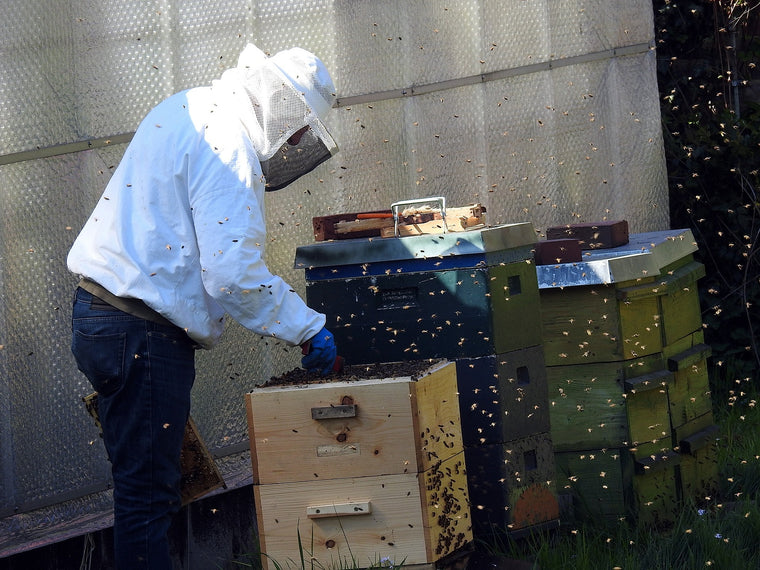 beekeeper collecting honey from beehives