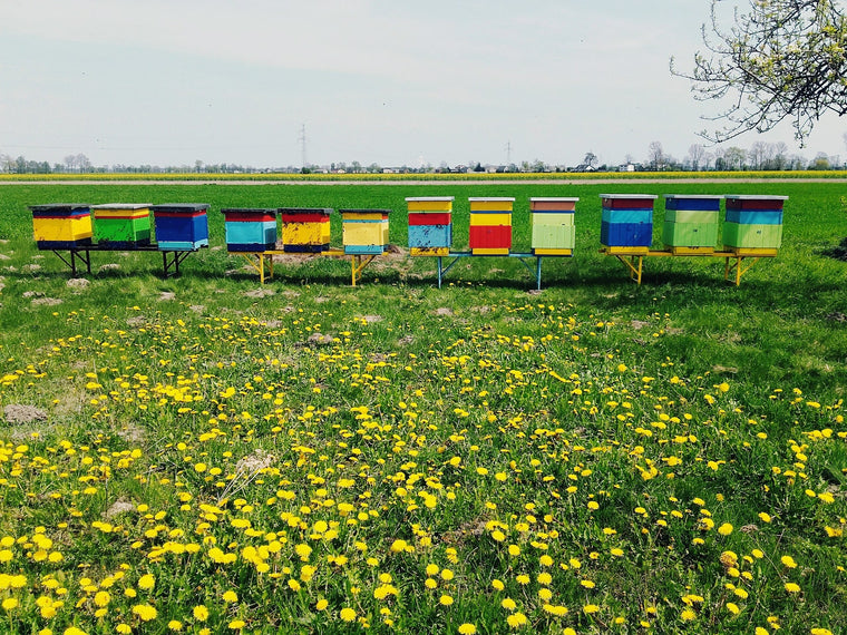beehives in flower field