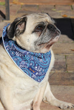 Load image into Gallery viewer, Cotton Blue Paisley Reflective Dog Bandana