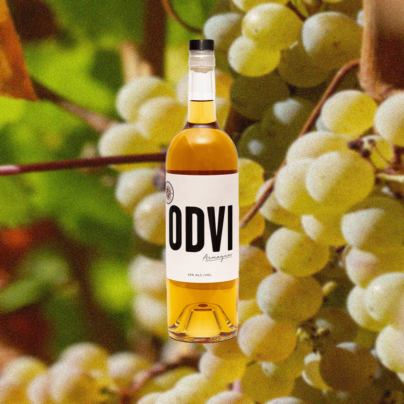 Bottle of ODVI Armagnac over backdrop image of white grapes.