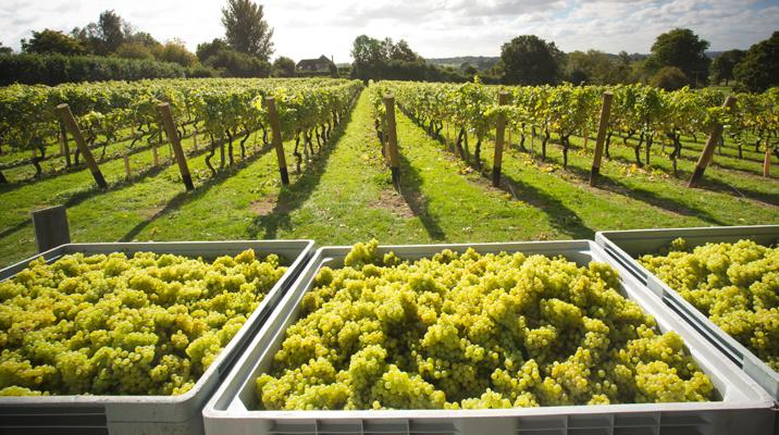 English Wine: Beyond The Fizz