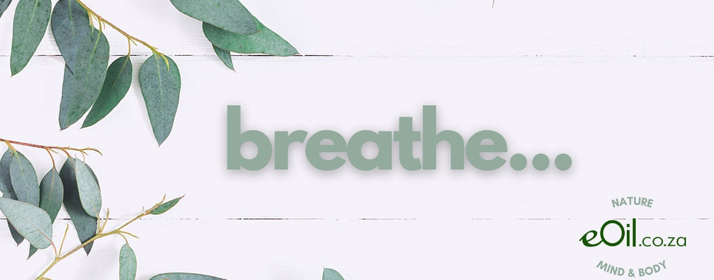 eOil.co.za breathe eucalyptus essential oils for breathing inhalation massage smithii globulus radiata citriodora dives