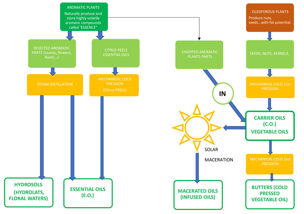 eOil.co.za infographics carrier oils, essential oils, macerated oils explained