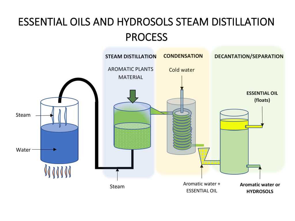 eOil.co.za Infographics essential oils and hydrosols steam distillation process