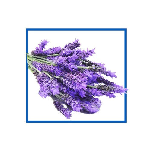 Lavender Natural Fragrance Oils 10 ml