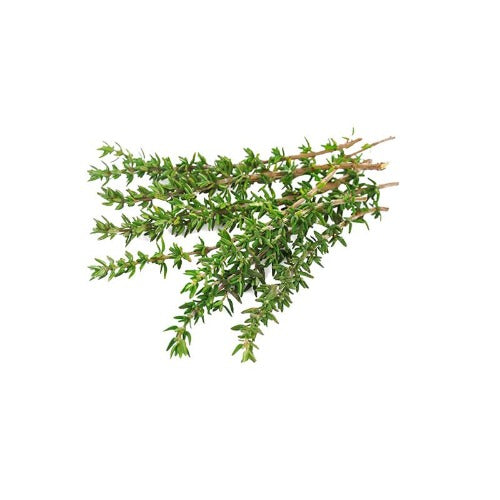 THYME RED NATURAL ESSENTIAL OIL (Thymus vulgaris) 10 ml - eOil.co.za