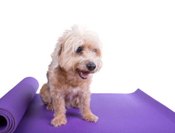 Pet Cooling Mats Is Ideal For Dog and Cat Owner | PETSUPPLIESEXPERT.COM