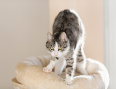 Why what and how all the things you must know about cats knead | www.petsuppliesexpert.com