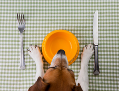 The Best Dog Bowls Of 2020 Get FOOD & WATER BOWLS from PSE