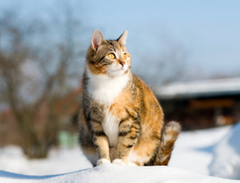 Why what and how all the things you must know about cats pregnency | www.petsuppliesexpert.com
