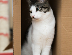 Why what and how all the things you must know about cats loves boxes| www.petsuppliesexpert.com