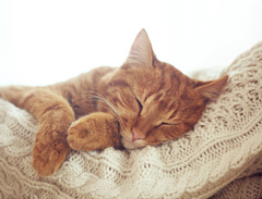 Why what and how all the things you must know about cats sleep so much | www.petsuppliesexpert.com