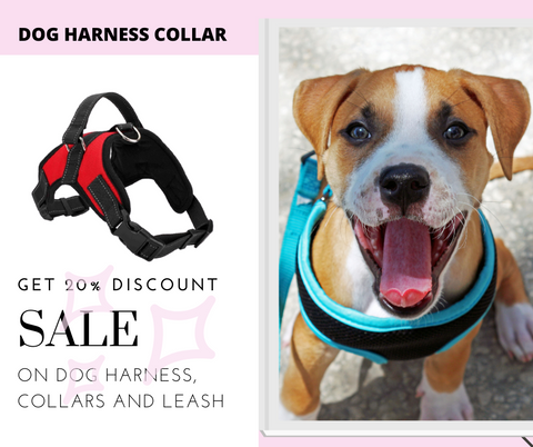 What to Look For in the Best Dog Harness? exactly no pull and comfortable