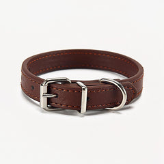 best dog collar to buy
