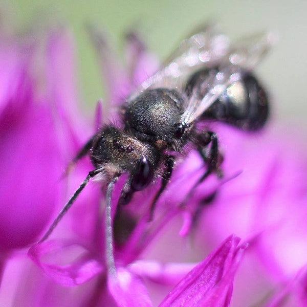 Mason Bee Season Is Almost Here!