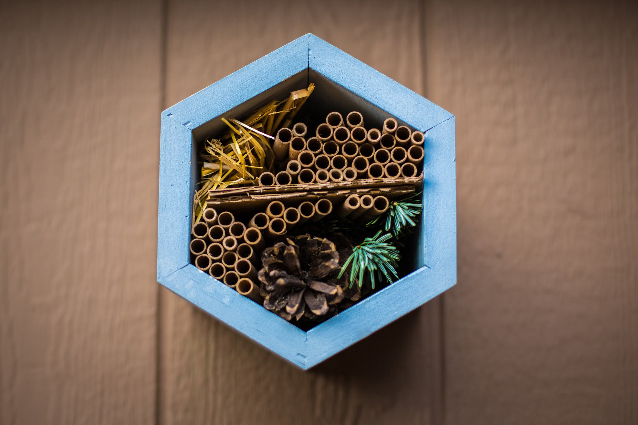 Everything You Need to Know Before Keeping Mason Bees