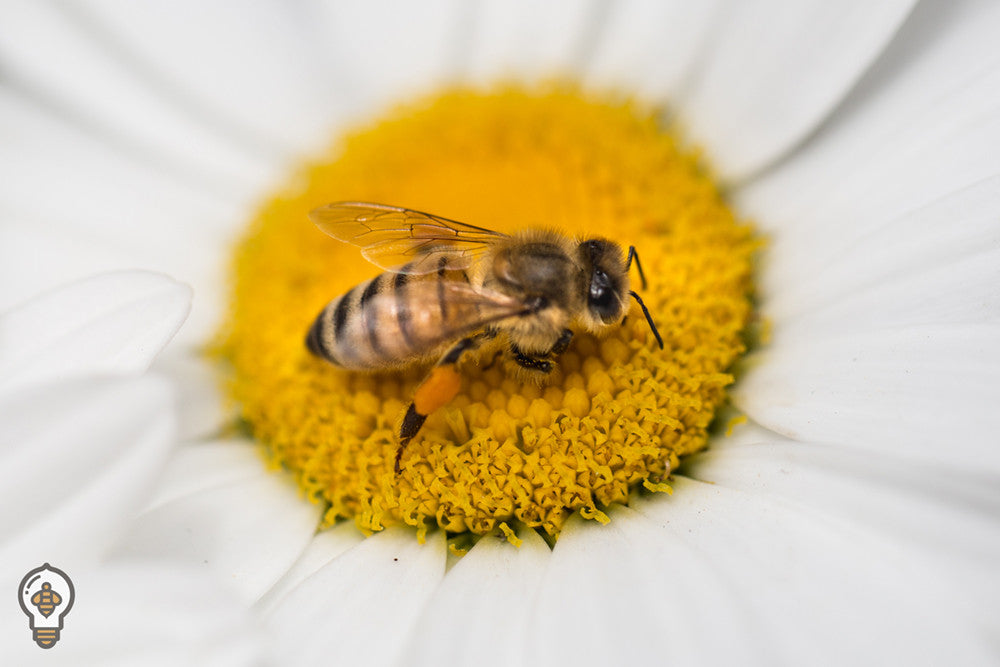 Overwintering Series: Planting for Pollinators