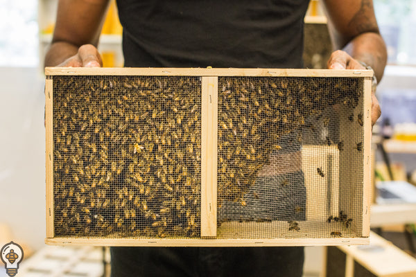 Learn About Our Bee Packages