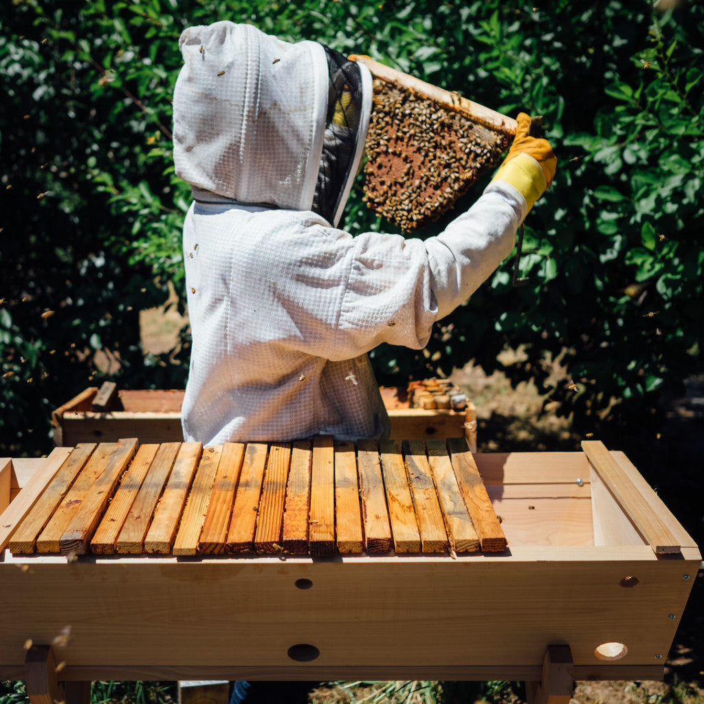 Advice for Beginner Beekeepers