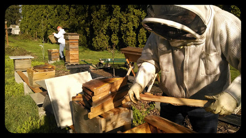 Beekeeper working inside of top bar hive