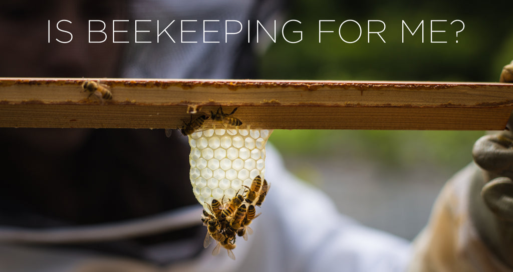 Is beekeeping for me?