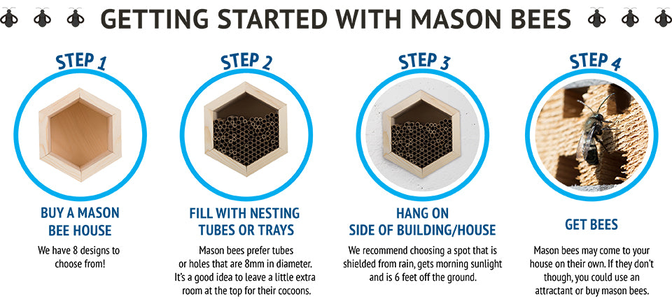 Getting Started with Mason Bees