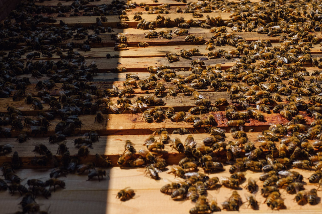 bees on a top bar hive