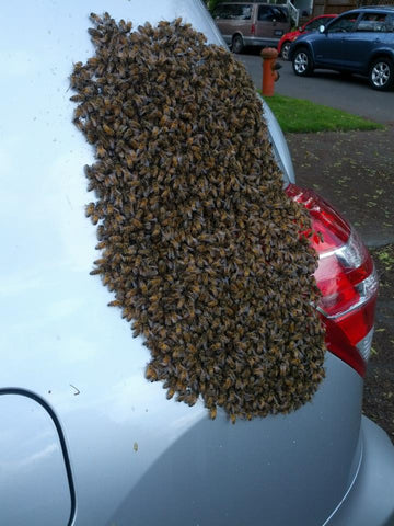 Swarm on car