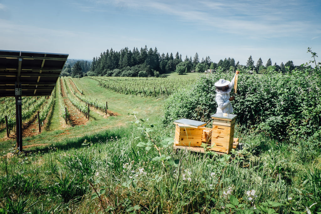 sokol blosser bees in the vineyard