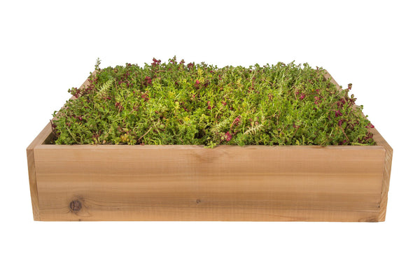 Langstroth Living Roof