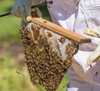 Hands-on Beekeeping