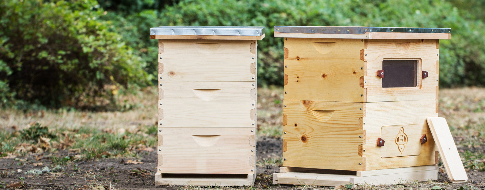 Langstroth Window Hives