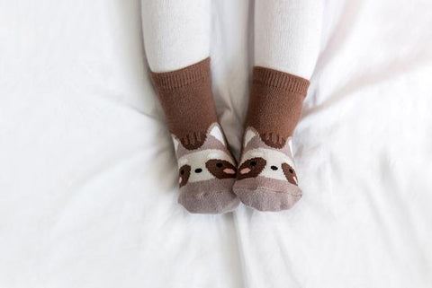 Zoo socks- raccoon