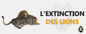 Extinction Du Lion
