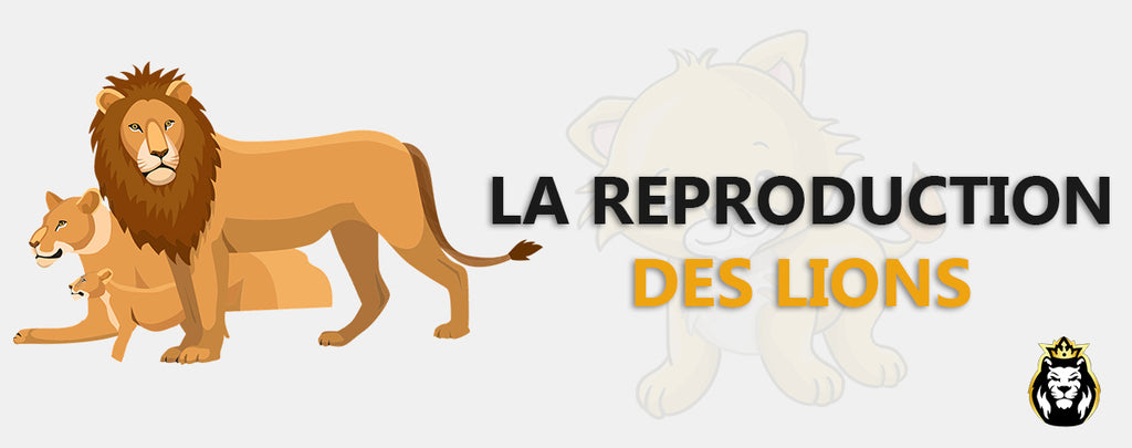 La Reproduction du Lion et sa Descendance !