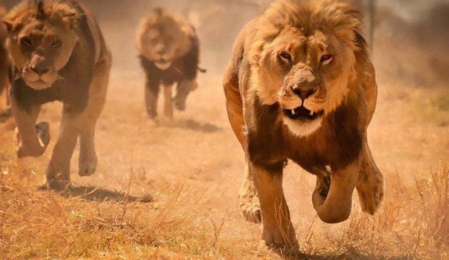 Groupe De Lion
