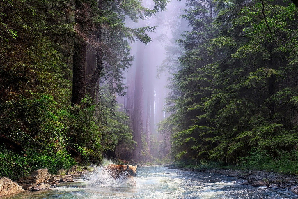 Redwood National Forest RV Road Trip