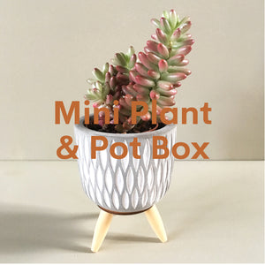 Mini Plant + Pot Subscription