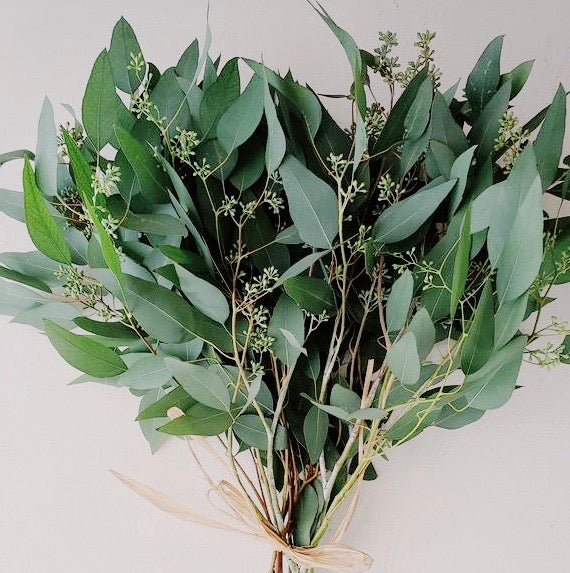 Fresh Eucalyptus bunch - Berries