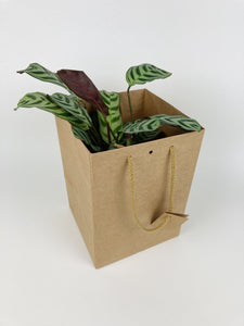 Kraft Paper Gift Bag with Rope Handles - Tall