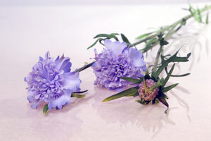 silk lilac scabious with two dainty flowers and a small bud