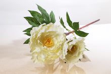 Load image into Gallery viewer, Beautiful large single ivory peony with bud