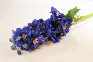 Brilliant dark blue double delphinium