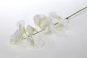Pretty silk white sweet peas