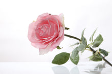 Load image into Gallery viewer, Beautiful light pink silk Hybrid Tea rose