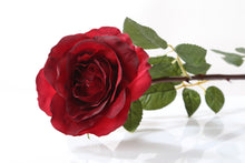 Load image into Gallery viewer, Beautiful red silk Hybrid Tea rose