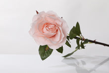 Load image into Gallery viewer, Pretty blush pink silk Hybrid Tea rose